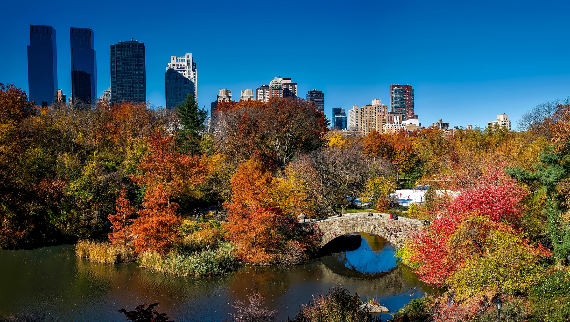 landscape-tree-water-skyline-leaf-fall-1026655-pxhere.com.jpg